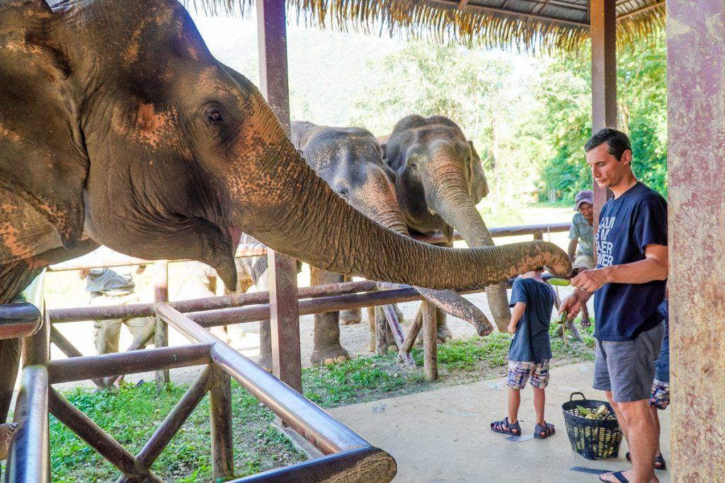 Thailand elephant resort