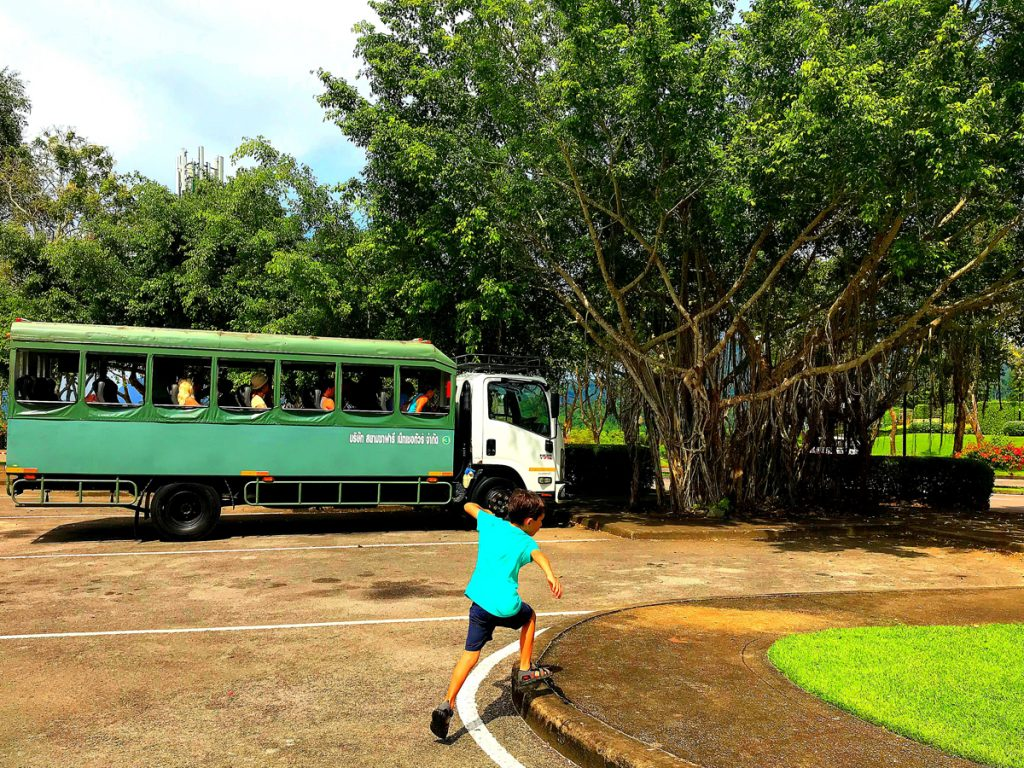 elephant-thailand-vacation